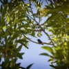hummingbird2-small