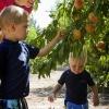 peach94-small.jpg