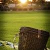 picnic2-small