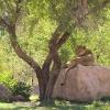 zoo8small.jpg
